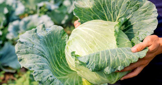 Cuisine pratique: comment blanchir des légumes (et les congeler)?