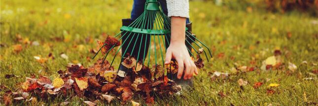 Que faire au jardin en novembre: les gestes essentiels au jardin bio