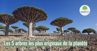arbres originaux