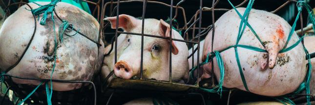 Le chiffre ahurissant des transports d'animaux dans le monde