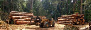 Votre banque est-elle complice de la déforestation ?