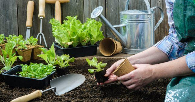 Jardiner en mars: jardin et potager au début du printemps