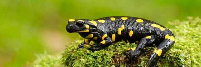 biodiversité ordinaire définition