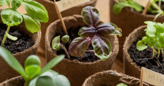 Calendrier des semis: quand et comment faire ses semis?