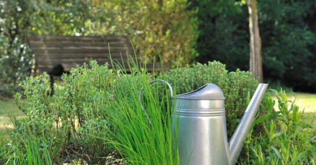 Plantes aromatiques – Comment planter de la ciboulette