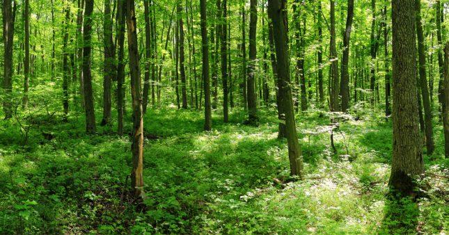 La litière forestière fermentée, un outil agroécologique pour la régénération des sols