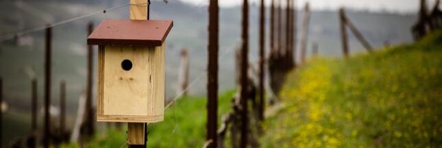 Viticulture – Favoriser les oiseaux avec des nichoirs dans les vignes
