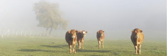 Pour lutter contre les dérèglements environnementaux, l'UE doit réformer la PAC