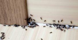 Astuces anti fourmis