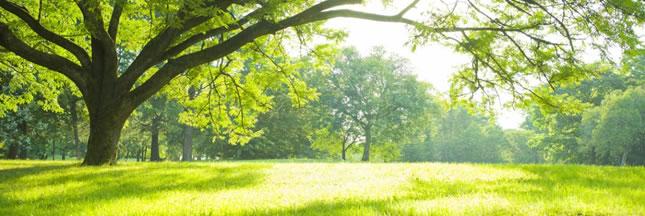 Prendre soin de son jardin de manière plus écologique