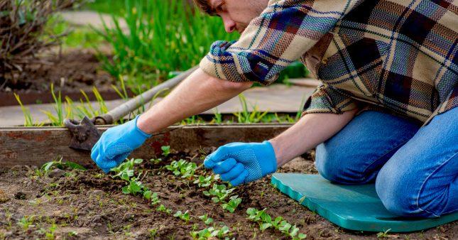 Jardiner en mai: jardin et potager au printemps