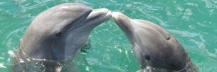 Si les humains vivaient comme des dauphins...