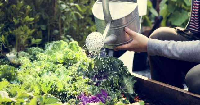 Au jardin: que planter en juillet, que semer, le potager et le verger