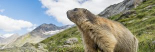 Vacances: 10 animaux sauvages à observer cet été