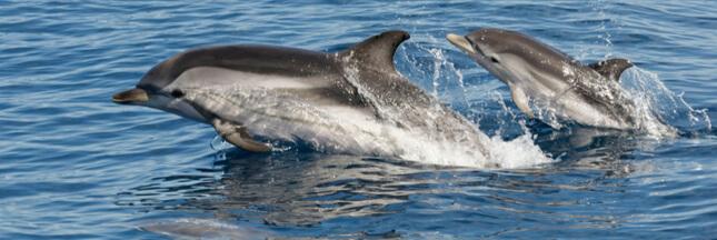 Passionné de dauphins, devenez observateur en Normandie