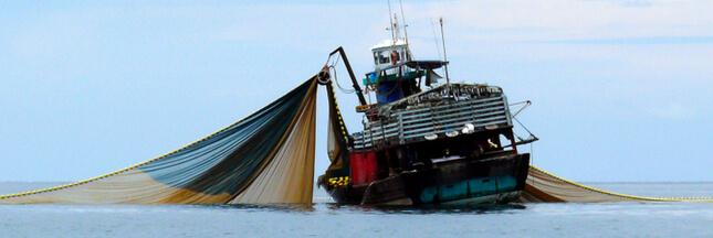 Les pêcheurs artisanaux vent debout contre un nouveau chalutier géant  français