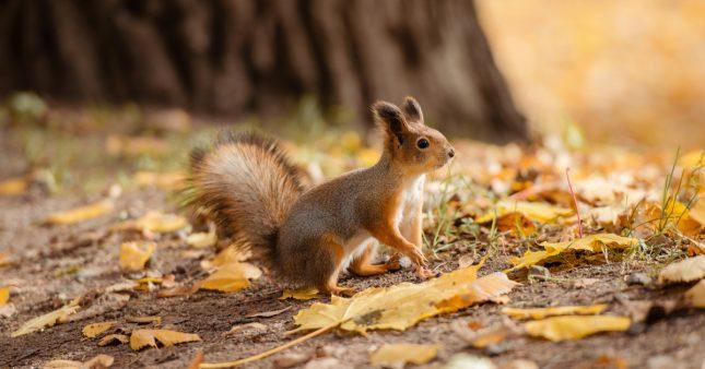 10 animaux à observer cet automne