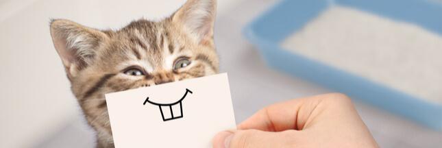 Comment lutter contre les mauvaises odeurs de la litière du chat?