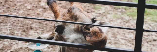 Maltraitance animale: un zoo dans le Tarn contraint de fermer