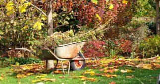 jardin automne