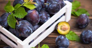 noyau prune du jardin