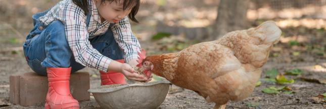 Poulailler à la maison: les normes à respecter