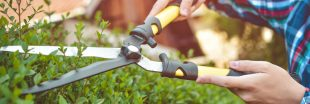 Jardinez en automne : taillez vos haies !