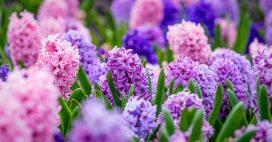Bulbes de printemps ou bulbes d'automnes: les bases pour se lancer