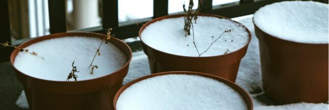 Préparer son jardin de balcon à l'hiver