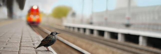 Le déclin irrémédiable des oiseaux d'Europe s'accentue