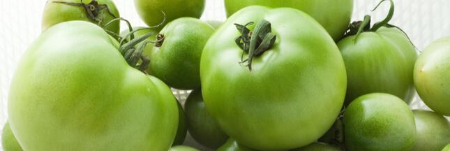 Tomates vertes: que faire avec les derniers fruits du jardin?