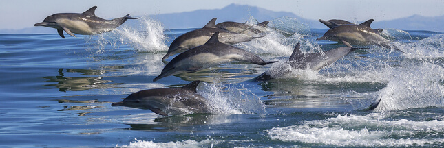 Le changement climatique produit une dermatite mortelle chez les dauphins