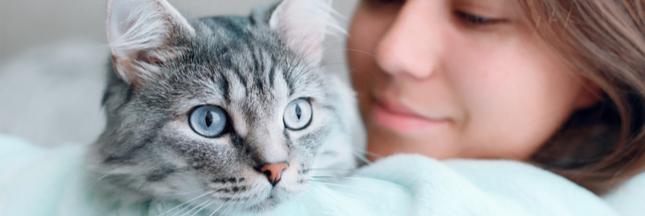 Les chats nés après 2012 doivent désormais être identifiés, c'est obligatoire !