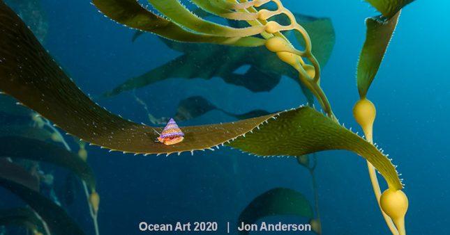 Les plus belles photos du concours Ocean Art Underwater Photo 2020
