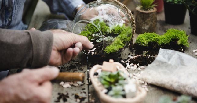 Comment entretenir mon premier terrarium?