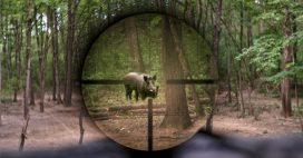 Alsace: du sanglier à la cantine pour écouler les stocks de la chasse?