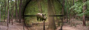 Alsace : du sanglier à la cantine pour écouler les stocks de la chasse ?