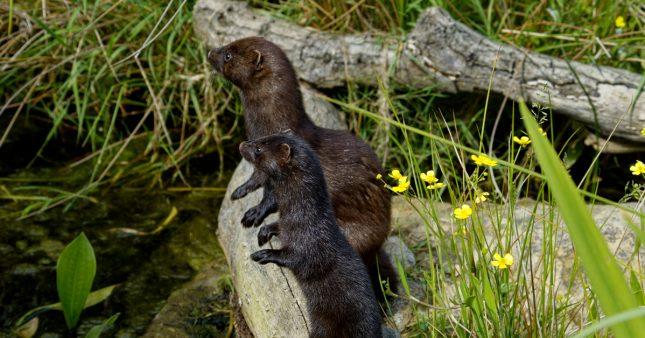 Liste rouge de la biodiversité: 1 espèce sur 5 menacée en France