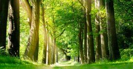 Les arbres victimes de la pollution sonore à long terme