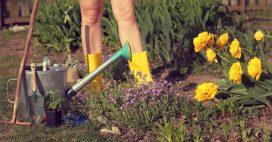 Tous à poil au potager samedi: c'est la journée mondiale du jardinage nu