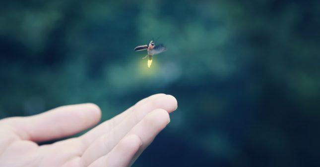 Bioluminescence – quand la nature nous éclairera