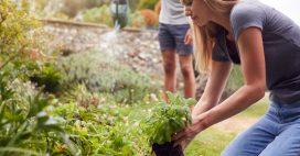 Des déductions fiscales à ne pas rater pour vos petits travaux de jardinage