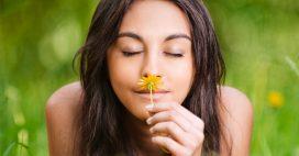 Le saviez-vous – À quoi sert le parfum des fleurs?