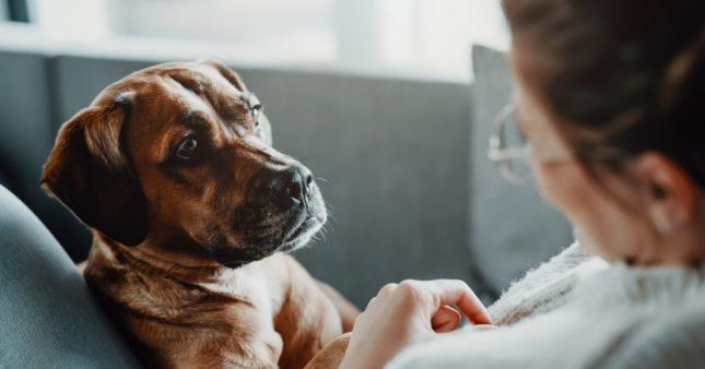 Sondage – Faut-il délivrer un permis pour détenir un animal de compagnie?