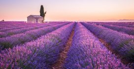 Les vrai-faux produits du terroir: la lavande de Provence