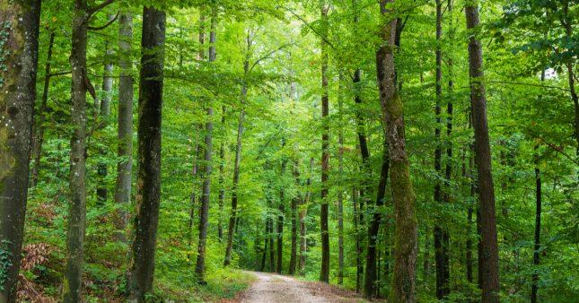 Pétition – Il faut sauver la forêt française pillée par les exploitants et la Chine