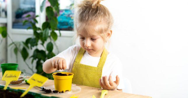 Des plantes grimpantes faciles à faire pousser avec les enfants
