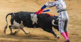 Corrida: à Nîmes, toujours pas de justice pour les taureaux!