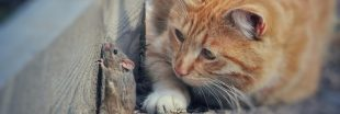 Comment nourrir son chat sans tuer un seul animal ?