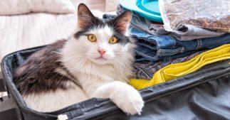 emmener chat chien vacances